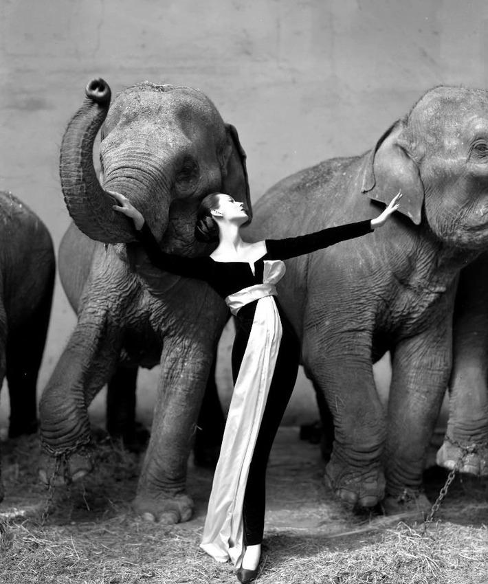 """16. Richard Avedon """"Dovima with Elephants"""" (1955), 1.151.976 dol."""