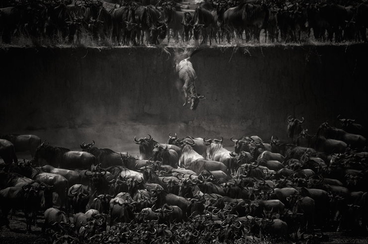 National Geographic Photo Contest 02