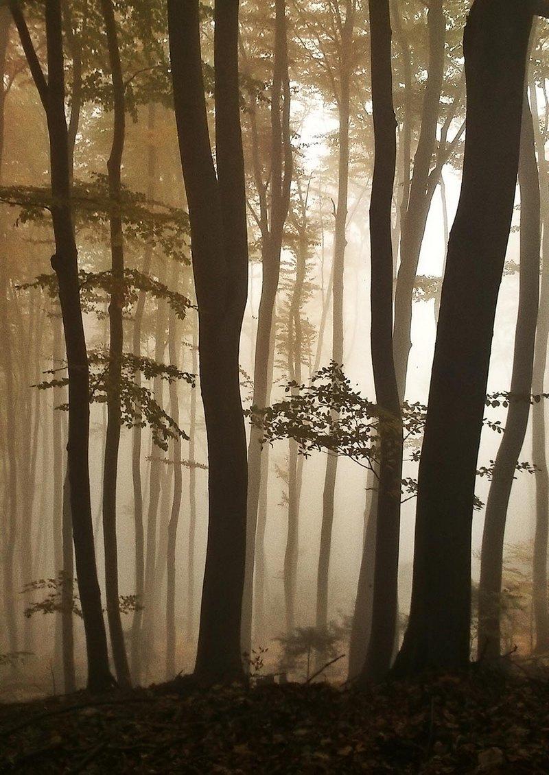 """""""Forest in the fog"""", fot. Paweł Głowacki. Wyróżnienie w kategorii LANDSCAPES oraz  NATURE AND WILDLIFE"""