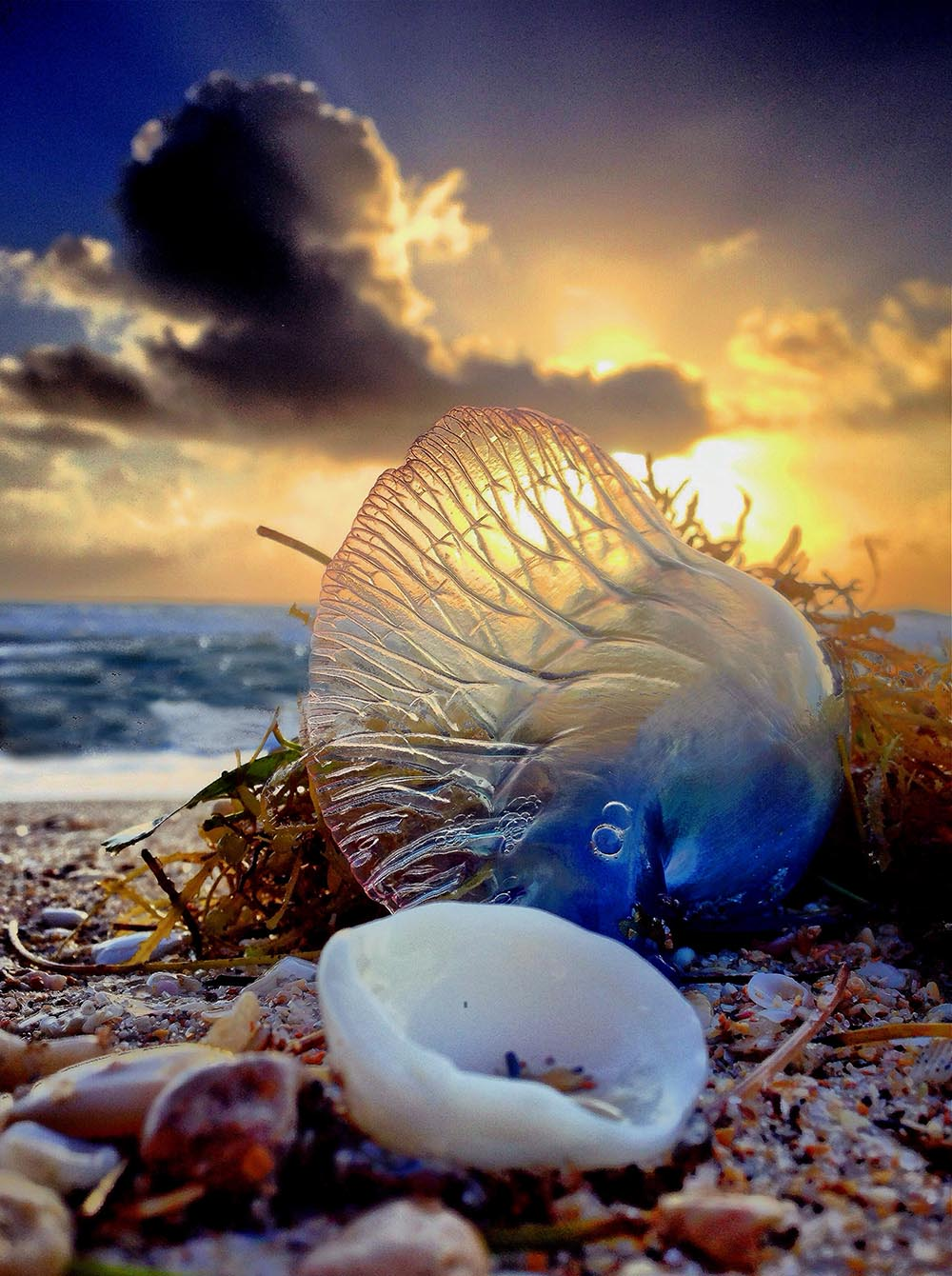"""NATURE & WILDLIFE - """"MAN O'WAR, ADVENTURES DONE"""" -  Andy Royston"""