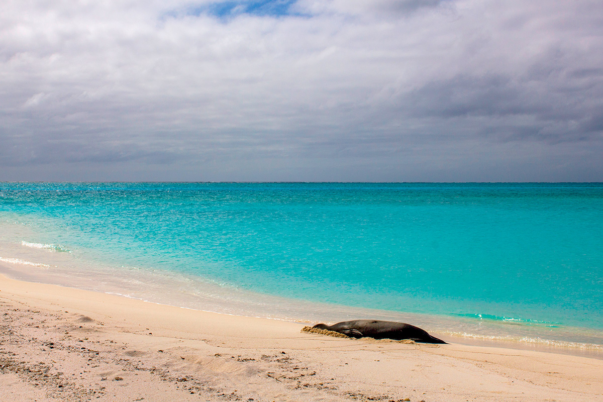 Midway Atoll, fot. Eric Dale