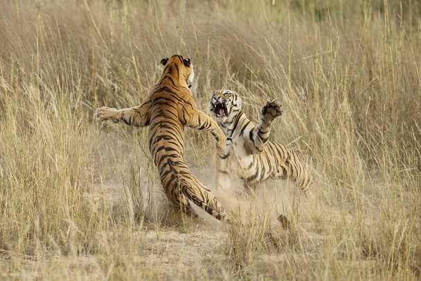 Fot. Archna Singh