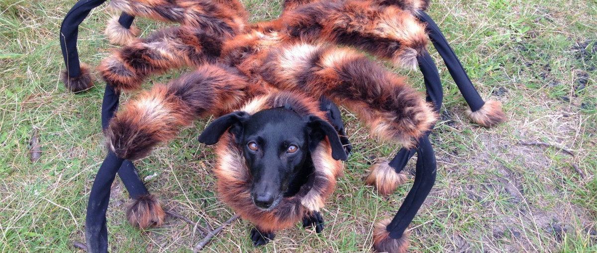 spider dog wardega
