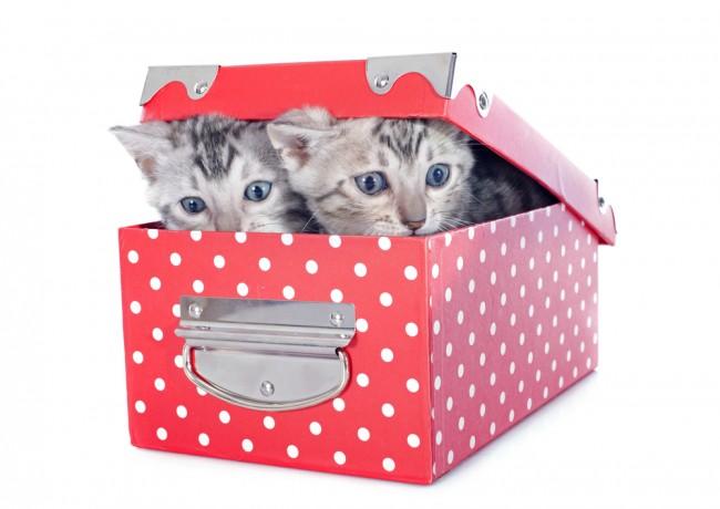 cats_box2